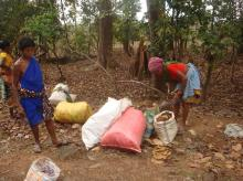 Tribals collect dry leaves at a forest in Bastar