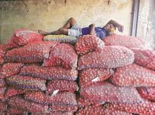 TEMPORARY LULL  A labourer sleeps on sacks of onions while waiting for customers at a wholesale market in Mumbai last week. Fears of the positive impact of the record kharif harvest turning negative are overstated. Courtesy: Reuters