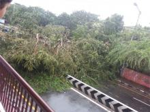 Trees are being uprooted due to high wind speed.