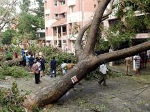 Residents look at the uprooted trees in a residential area which have been the worst hit due to the cyclone Vardah that brought life to a stand still across Chennai. Photo: PTI