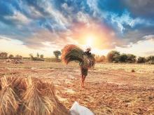 Farmer caution slows seed demand