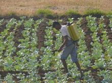 Time for PPPs in agriculture
