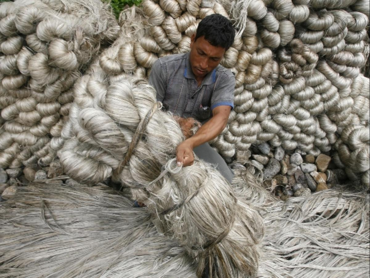 Will pay jute mills only after they pay farmers, workers in