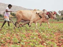 Water conservation: Nabard to help 1,00,000 villages before monsoon