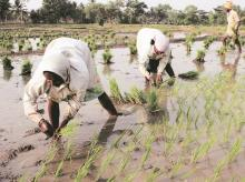 Farmers, Agriculture, sowing