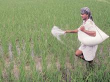 Aditya Birla Group fertiliser arm Grasim