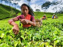 The workers were on the rolls of Bargaon tea garden in Biswanath
