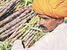 Sugarcane arrears touch Rs 6,500 cr on global market glut, export woes