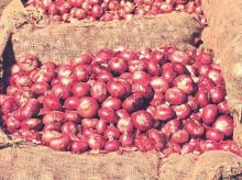 onions, onion prices