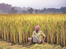 The use of procurement as an instrument to enforce MSP is usually costly and costlier for crops where a ready avenue for disposal does not exist