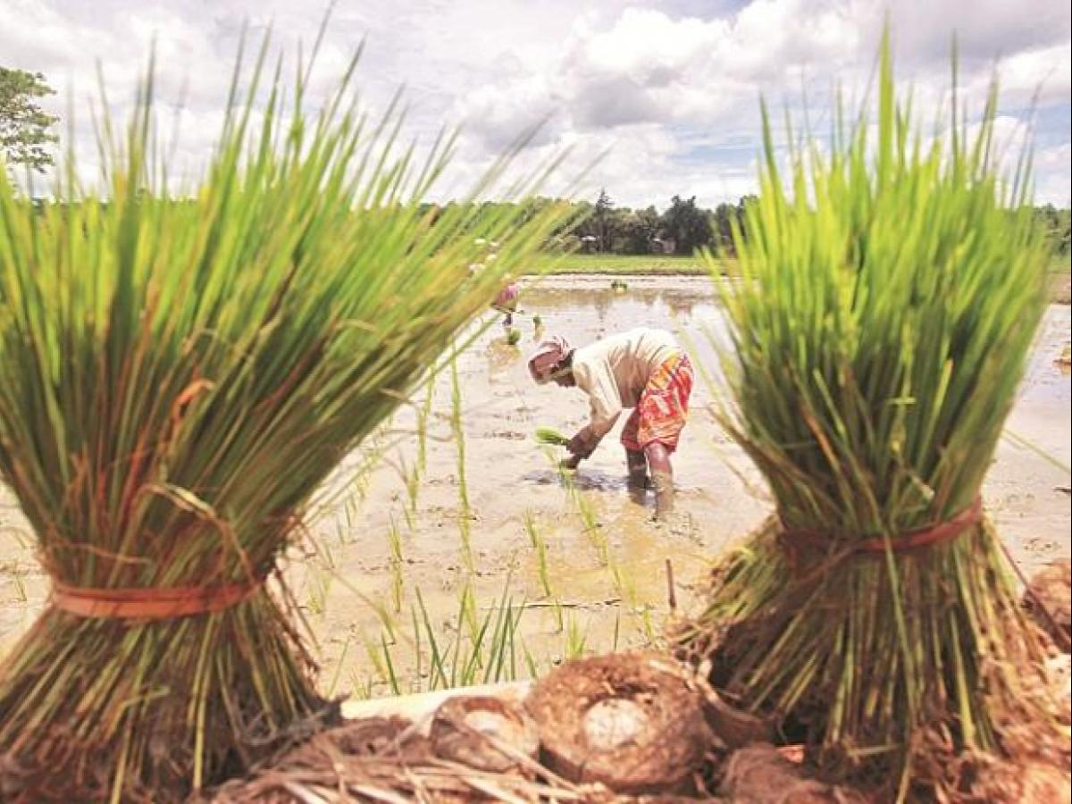 How to beat climate change? Lessons from 'progressive farmers' of
