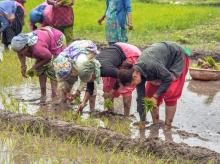 agriculture, farming, crops, cultivation, monsoon