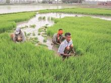 Area under kharif crops shrinks due to inadequate rain in east India