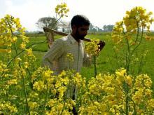 farmer, msp, agriculture