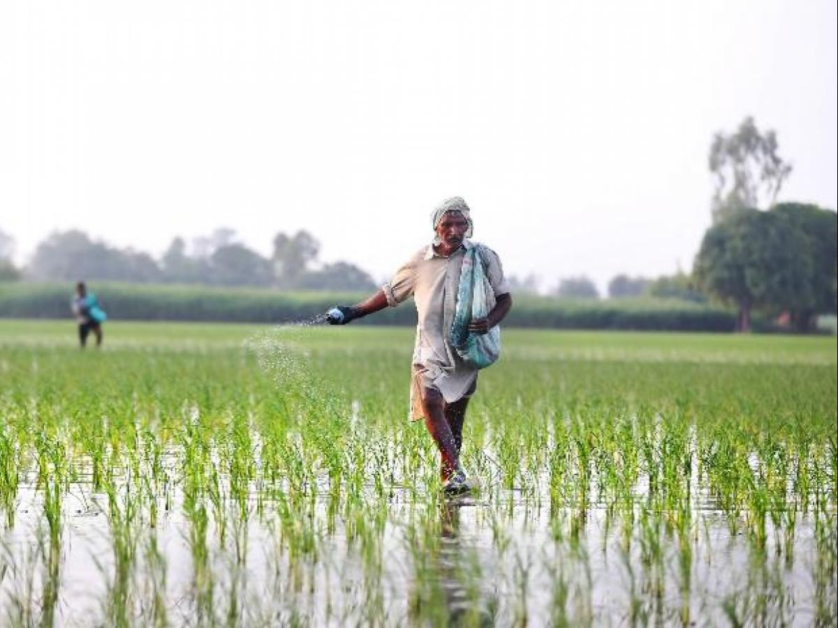 Indian farm size shrank further by 6% in 5 years to 2015-16, census