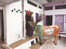 campaigning cow, madhya pradesh assembly election