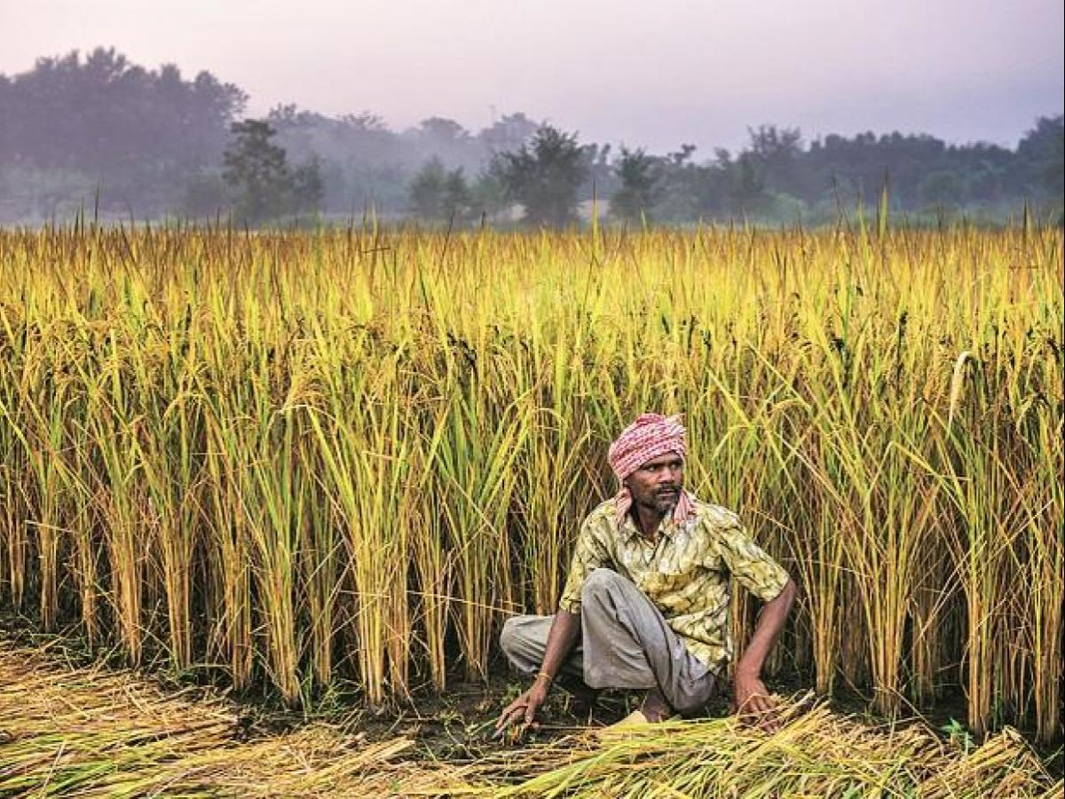 Agricultural issues and challenges in Andhra Pradesh during