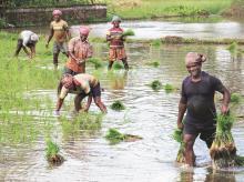 Farmers, Farm sector