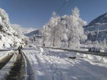 Trees covered with snow following heavy snowfall, in Manali