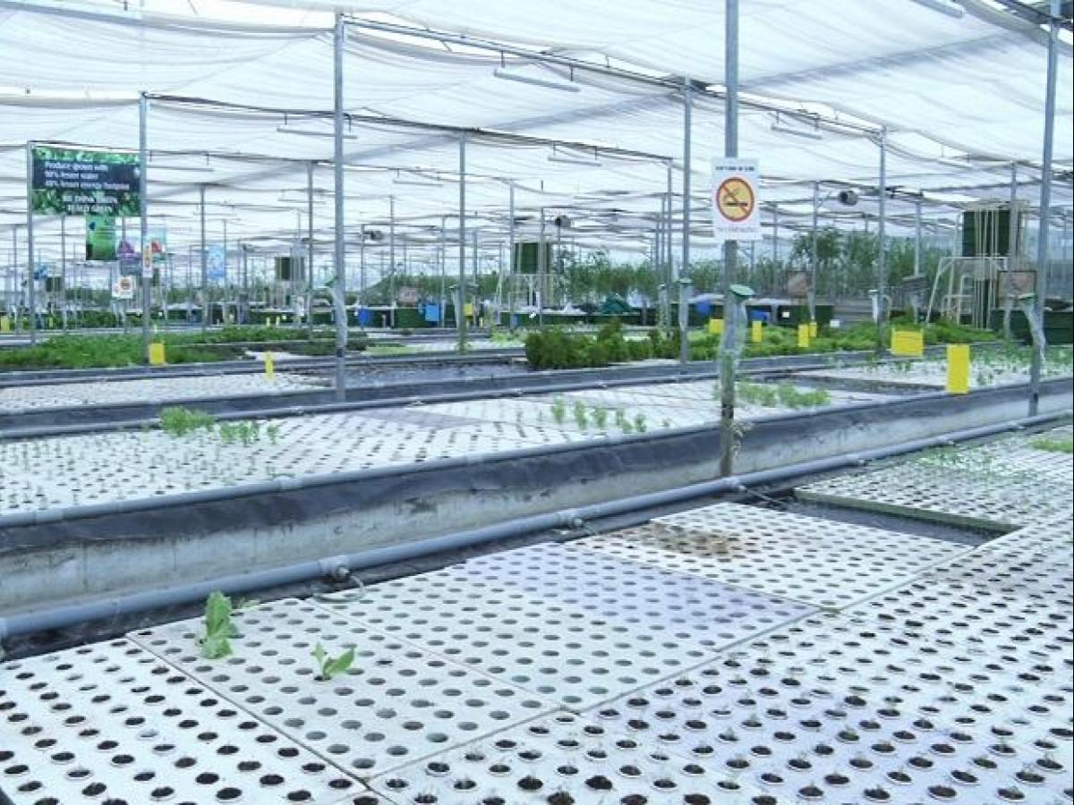 Aquaponics farming gaining ground but limited by costs