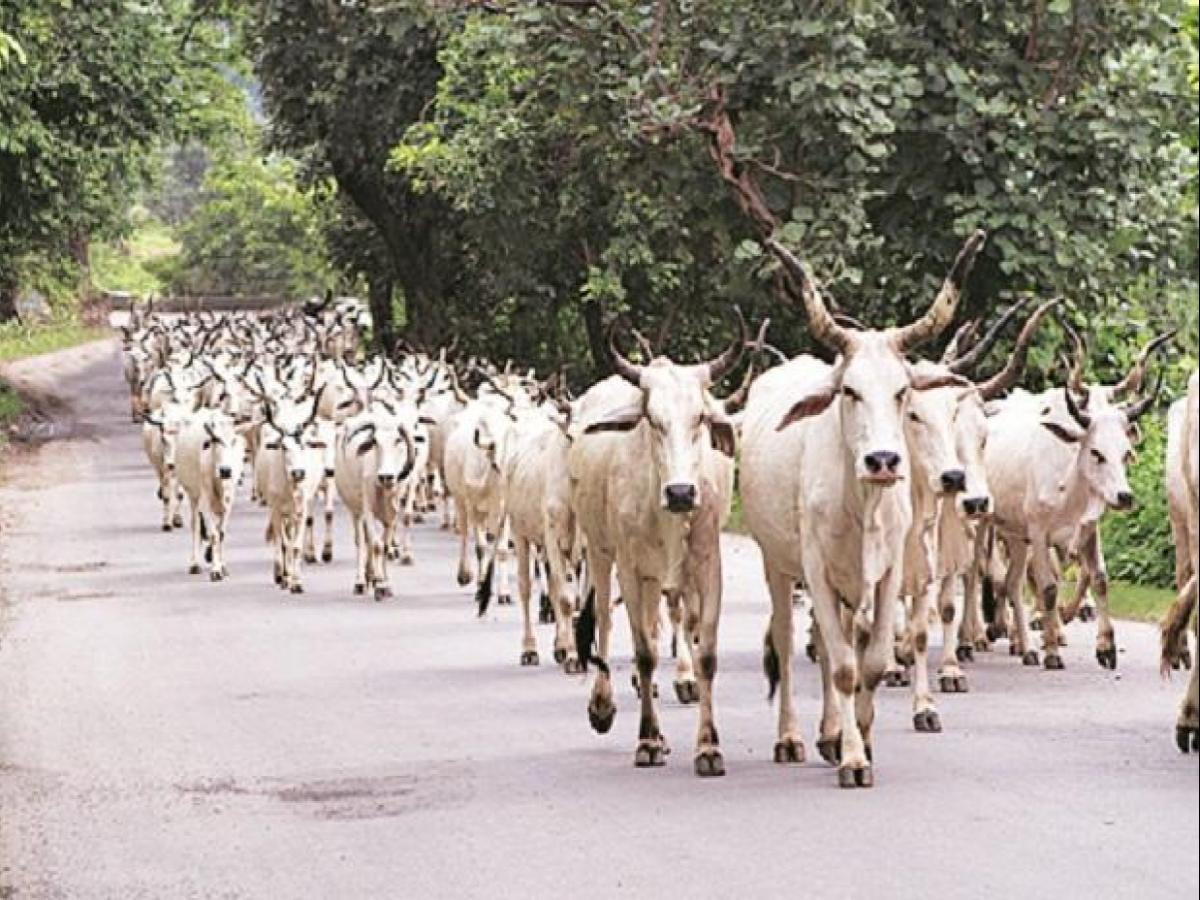 Centre working on tech-based model to tackle stray cattle