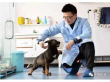 The first cloned dog. Photo: Chinese state media