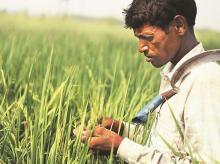 farmer, agriculture