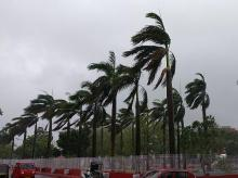 Cyclone Fani: Trees bend with gusty winds ahead of the landfall of cyclone Fani, in  Bhubaneswar, Friday, May 3, 2019. (PTI Photo)
