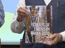 Prime Minister Narendra Modi releases All India Tiger Estimation 2018 on International Tiger Day | Photo: ANI