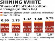 Bt cotton regains farmers' confidence, acreage under crop goes up to 93.6%