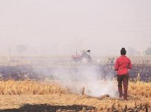 Punjab, Haryana announce Rs 2,500 an acre incentive to stop stubble burning