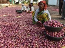 Onion (Photos by : Kamlesh Pednekar)