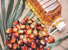 oil, oilseed, production, edible