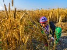agriculture, farming, farmer, crop, coronavirus