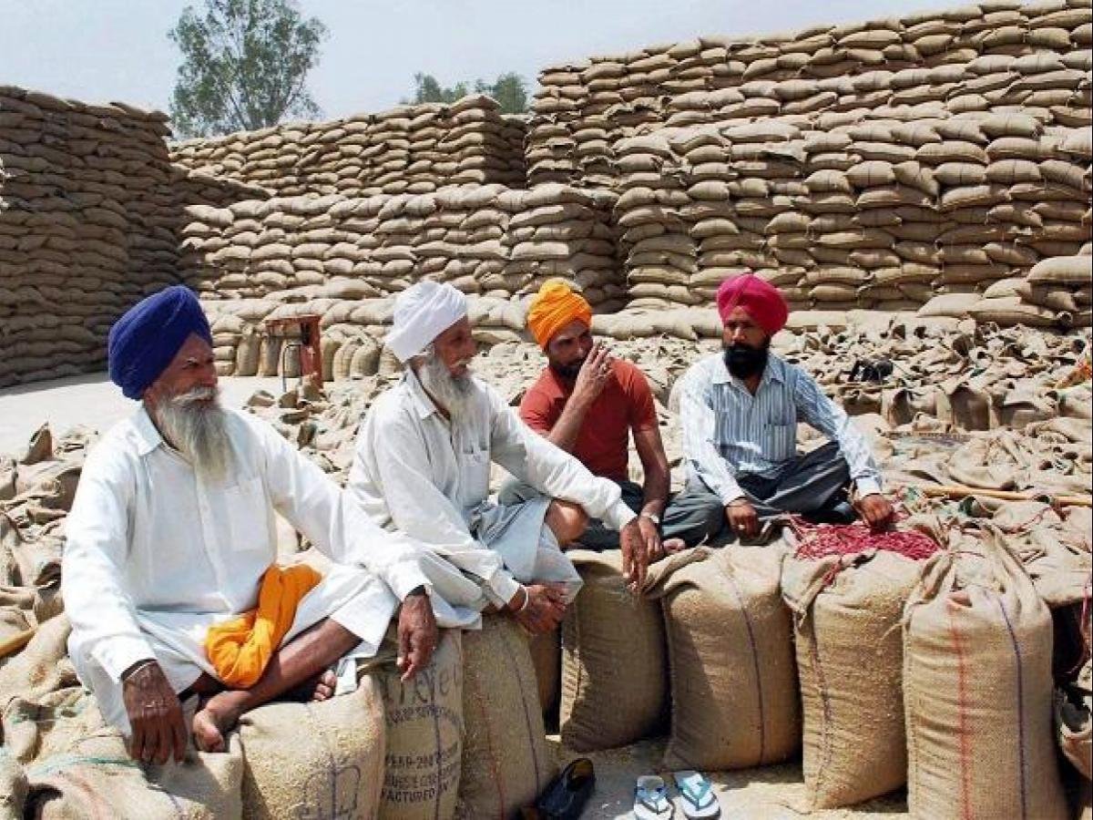 Punjab, Haryana to begin wheat procurement with social distancing in mind |  Business Standard News