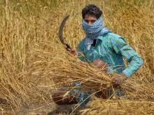 farmer, agriculture, crop