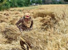 farmer, crops