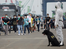 Indonesian crew members from the Carnival Splendor cruise ship walk to coronavirus testing as a member of the navy K-9 unit stands guard as the ship arrived at the Tanjung Priok Port in Jakarta, Indonesia. Photo: PTI