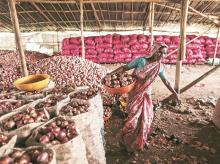 onions, market, farmers, storage, deregulation, prices