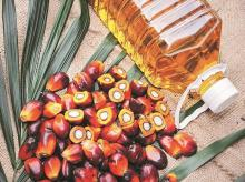 edible oil, edible oil import