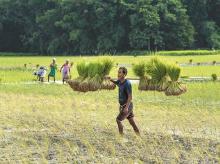 agriculture, farming, farmers, farm, crops, kharif, sowing