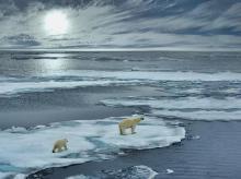 Arctic circle, polar bearArctic circle, polar bear