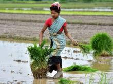 farmers, agriculture, produce, products, grains, apmc, market, msp, godown, cold storage, farming, farmers, women