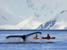 Antarctica, whale, climate change