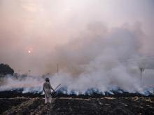 stubble burning, punjab