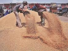 Agriculture, farmers, wheat, procurement, MSP, APMC, commodity