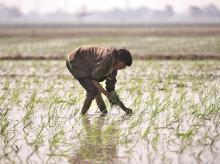 farmers, agriculture, economy, farming