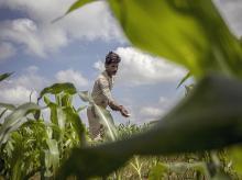 Farmers, agriculture, fertilizer, pesticides