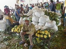 A vegetable vendor sits near the bags of cauliflowers at Azadpur Mandi as farmers' protest entered the fifth day, in New Delhi on Tuesday, June 05, 2018.
