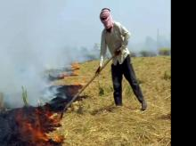 Stubble burning rose by over 20% this year: Air quality commission official